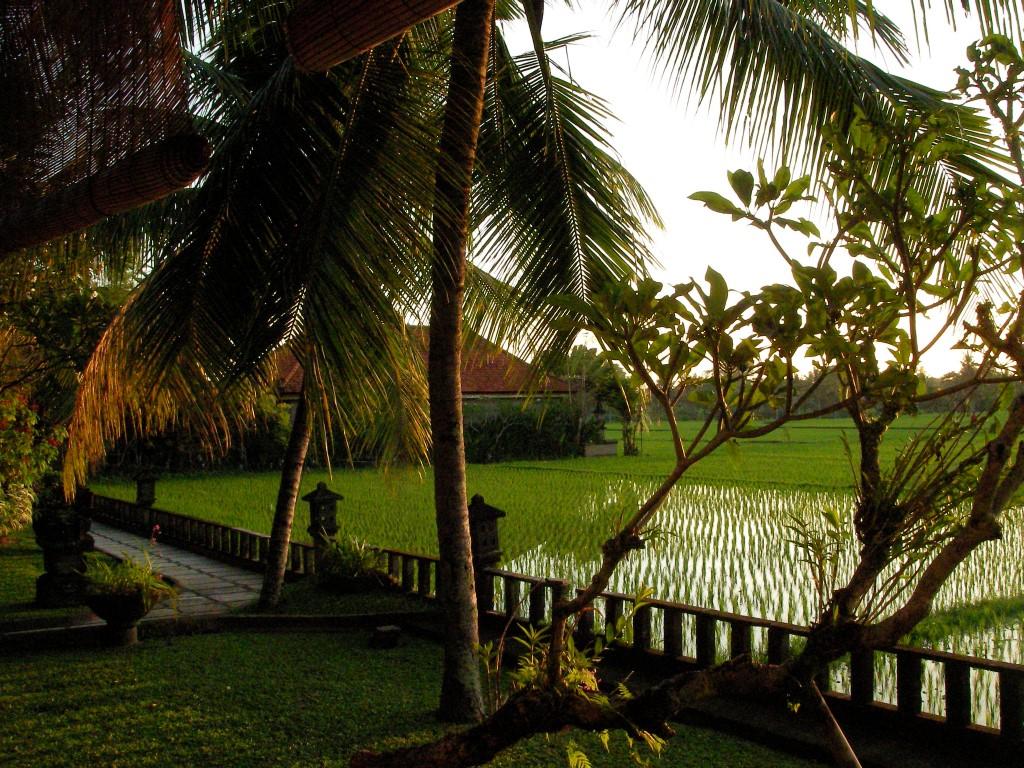 Green field Ubud - I Love Bali (86)