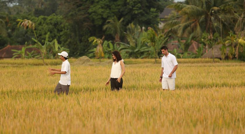 Alaya Resort Ubud - I Love bali (15)