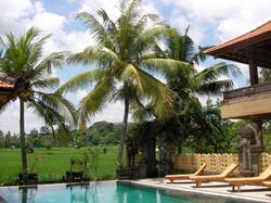 Green field Ubud - I Love Bali (85)