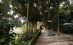 Kupu kupu barong - I Love Bali (26)