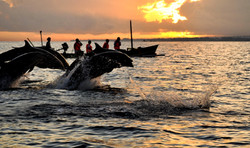 Dolphin tour - I Love Bali (3).jpg