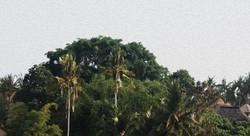 Teba House - I Love Bali (3)