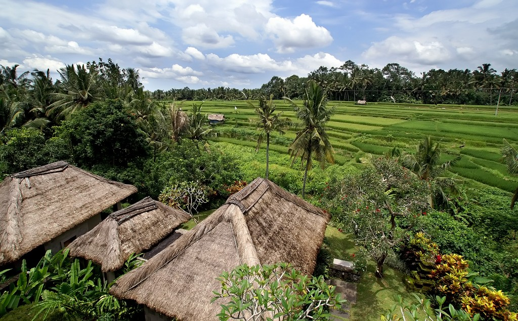villa-to-ricefield-view-1024x634