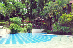 Kupu kupu barong - I Love Bali (11)