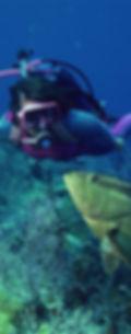 Bali sukellus