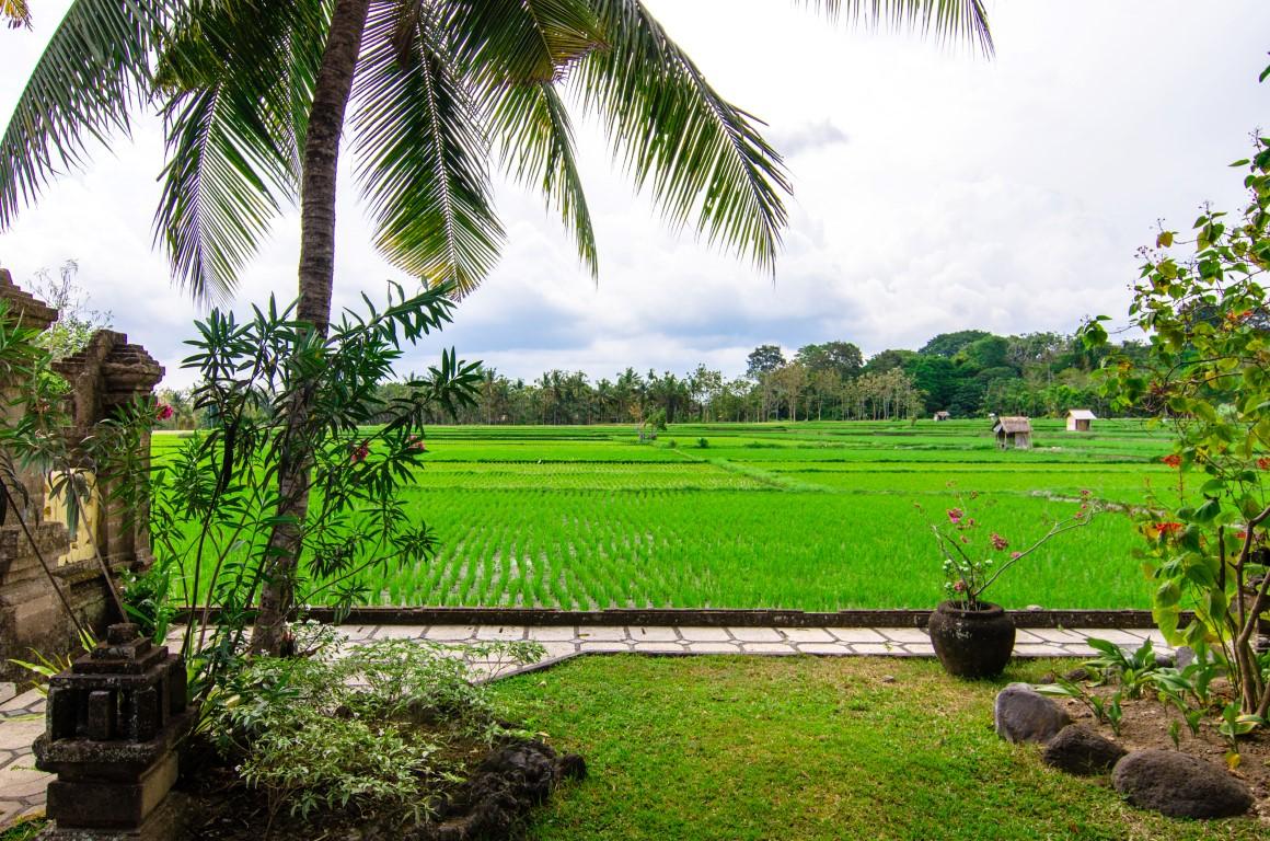 Green field Ubud - I Love Bali (79)