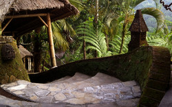 Kupu kupu barong - I Love Bali (19)