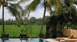 Green field Ubud - I Love Bali (91)