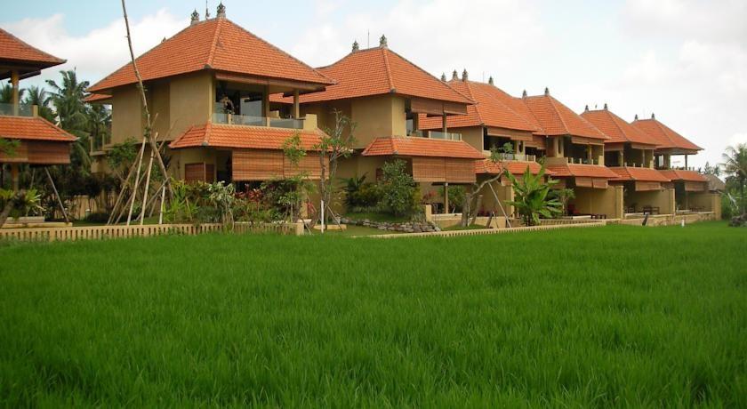 Green field Ubud - I Love Bali (90)