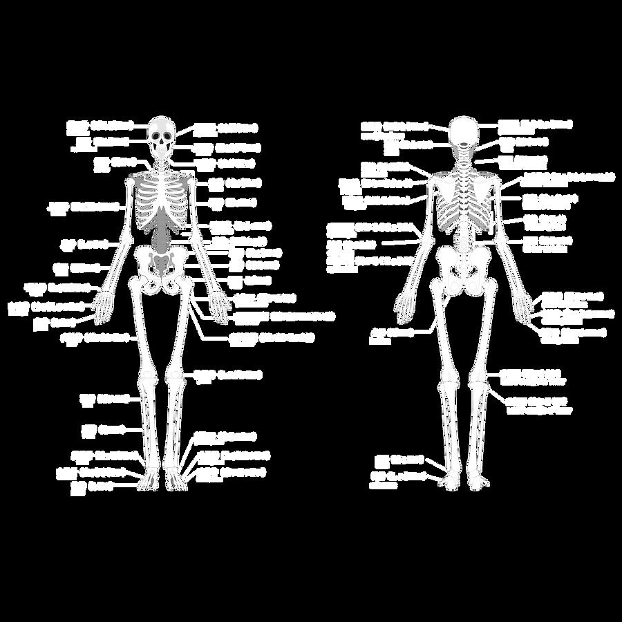 骨格名称画像.png