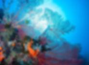evelyns-reef002_orig.jpg