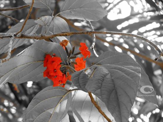 Flower highlights