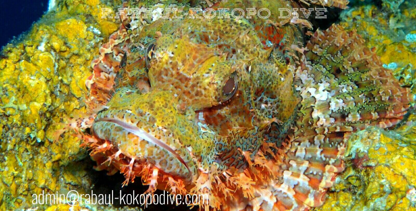Rabaul Kokopo Dive