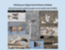 Happy Social Distance Birding.jpg