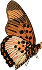 mariposa01.png