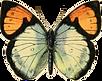 mariposa02.png