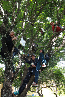 Jengi puussa
