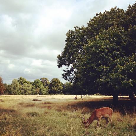 Escapade en UK #2 - Richmond Park