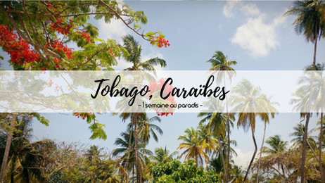 Une semaine de rêve à Tobago, Caraïbes - Mai 2017