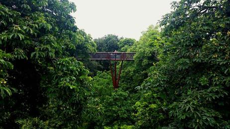 Kew Gardens - Royal botanic gardens
