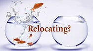 relocating-fish.jpg