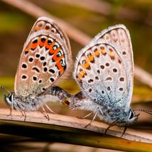 MorganJane_butterflys.jpg