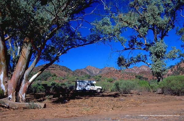 flinders_eucalyptus_img0062_web_01.jpg
