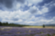 sault_ventoux_wolken_dram_MG_7320_02.png