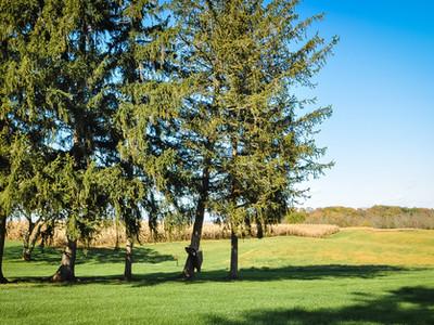 Tall Pines Surrounding
