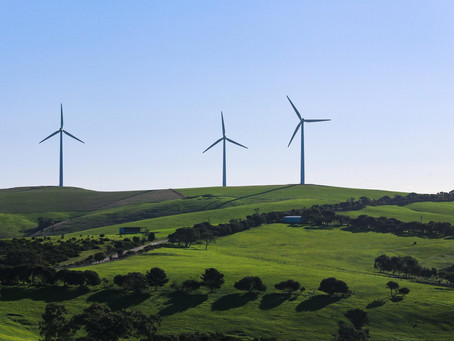 Renewable Energy: Nature's Friend or Foe?
