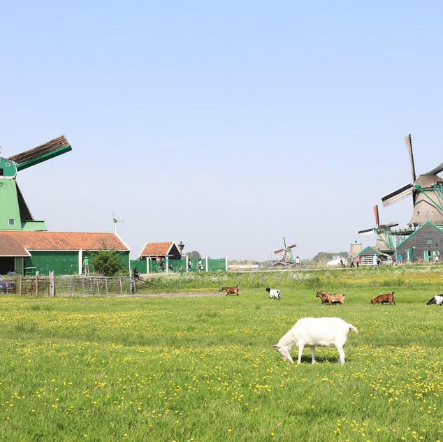 Zaan Schans, Netherlands
