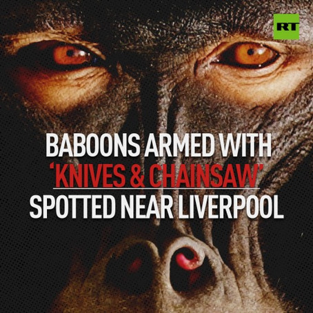 TOOLED UP BABOON...