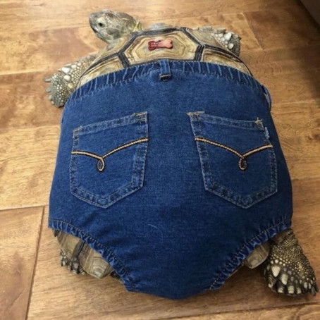 A TORTOISE IN JEANS...