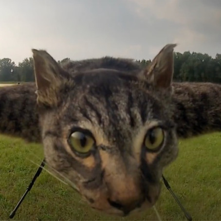 REMOTE CONTROLLED FLYING DEAD CAT...