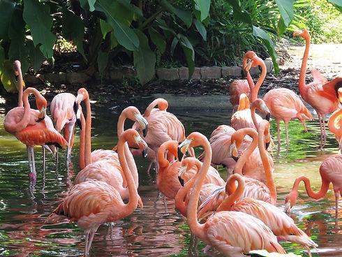 flamingo-2458782_1280.jpeg