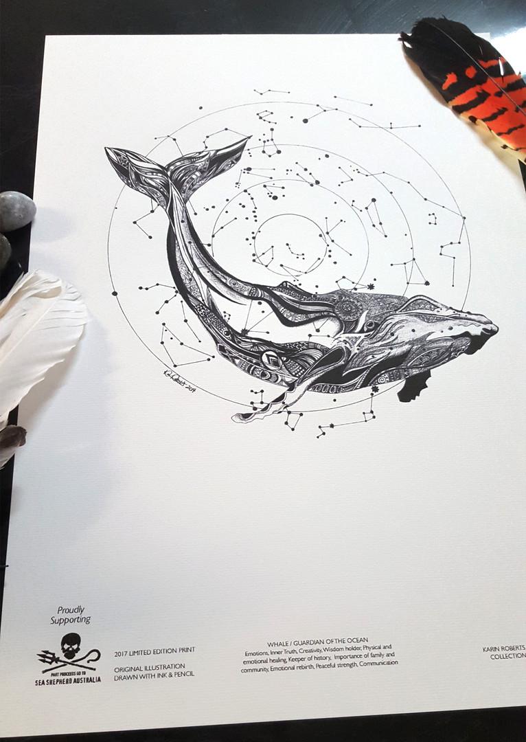 Whale Sea Shepherd