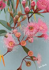 FloweringGum.jpg