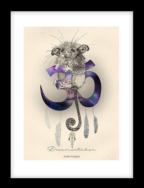 Dreamcatcher - Pigmy Possum