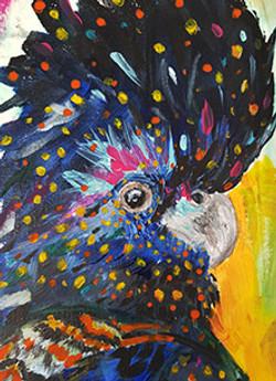 Harold - Black Cockatoo