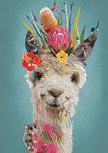 LlamaWEB.jpg