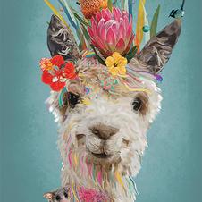 Adorable Llama