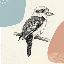 Ornate Kookaburra