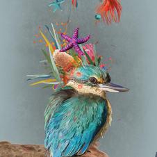 Wise Kingfisher