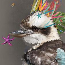 Quirky Kookaburra