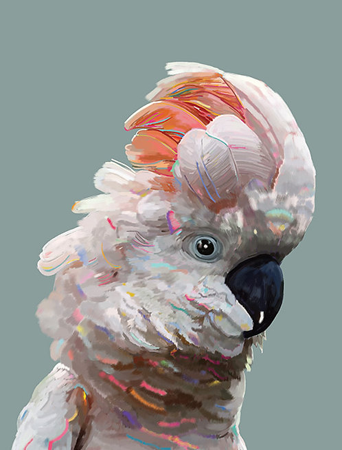 Ruffled - Australian Cockatoo