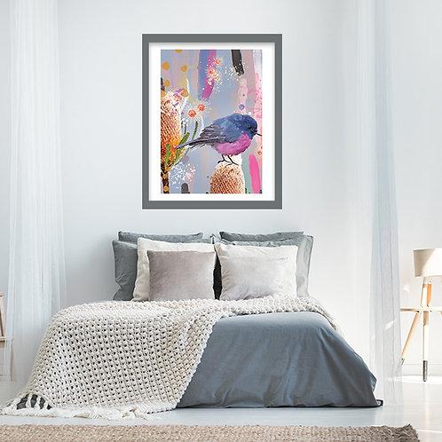 Australian Pink Robin