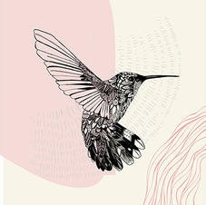 Ornate Hummingbird