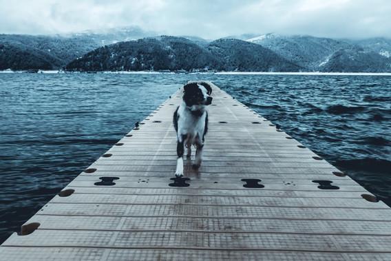 Basin the adventure pup