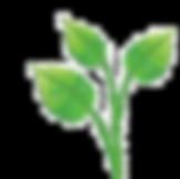 logo%20leaves_edited.png