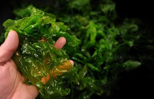 Sargasses -Transformation - Bioplastique